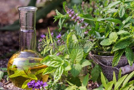 friske urter til skansom medicin