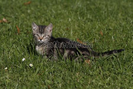 mated cat child