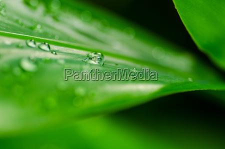 blad miljo falde vanddraber vand graesplaene