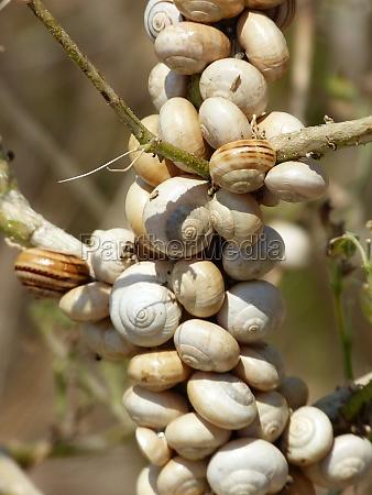 mallorca snegl snegle sneglehus natur