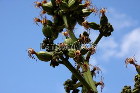 blå, blomst, plante, vækst, grøn, grønt - 10820866