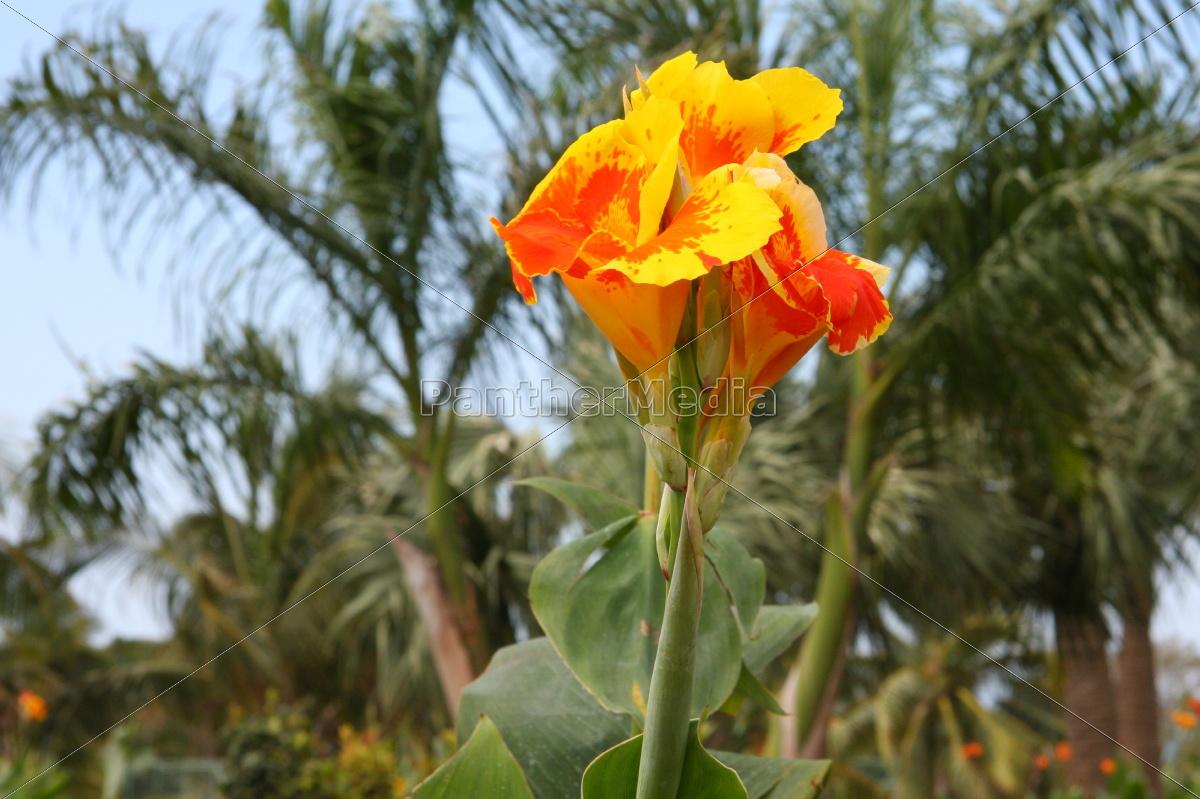 blomst, plante, vækst, blomstre, blomstrende, blomsterpragt - 10820616
