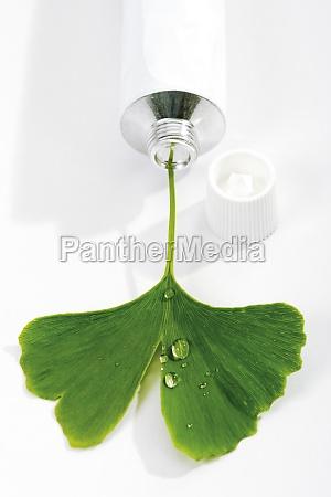 stilleben blad sundhed tandpasta blade friskhed