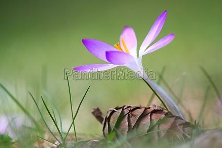 miljo blomst plante vaekst blomstre blomstrende