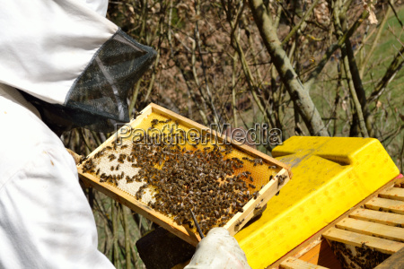 bier bistade honningbier biavleren biavler