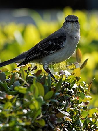 dyr fugl wildlife