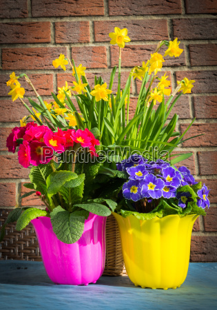 spring flowers on the balcony