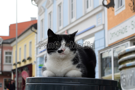 domestic cat on the town square