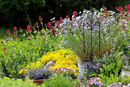 farverige blomstrer i haven