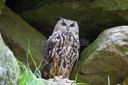 sten dyr fugl brun vild vilde