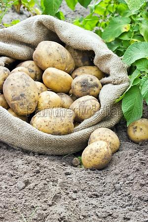 mad levnedsmiddel naeringsmiddel fodevare blad have
