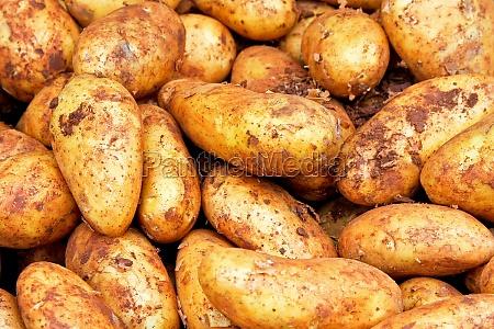 mad levnedsmiddel naeringsmiddel fodevare beskidt kartoffel