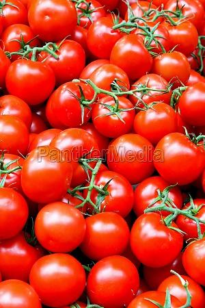 tomat med vin