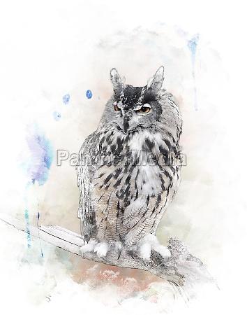 akvarel billede af owl