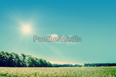 countryside field with sunshine
