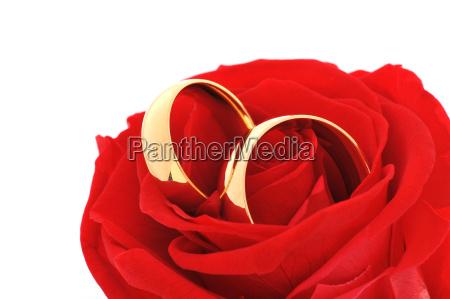 to ringe med rose