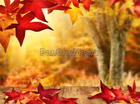 autumnal idyll