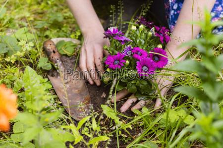 plantning blomster