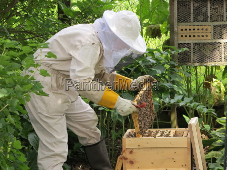 insekter bier bistade biavl honningbi bikube