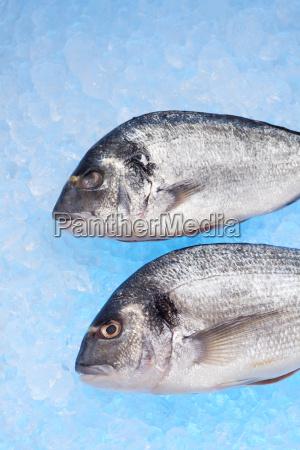fisk is ra afkolet brasen