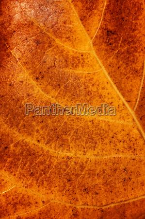 golden dry leaf background
