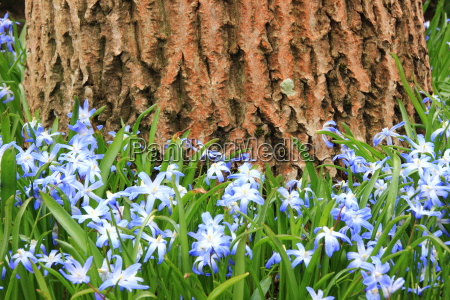 bla blomst plante vaekst forar var