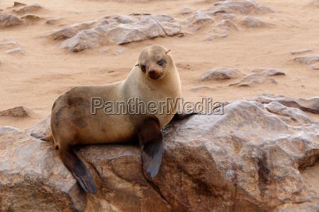 enlig park dyr pattedyr brun fauna