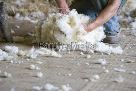 young farmer bundling sheeps wool