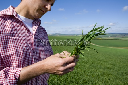 close up of farmer examining young