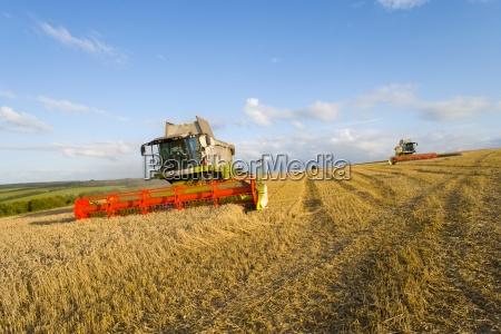 kombiner host hvede i det solrige
