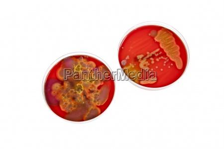 stilleben makrooptagelse close up naerbillede farve