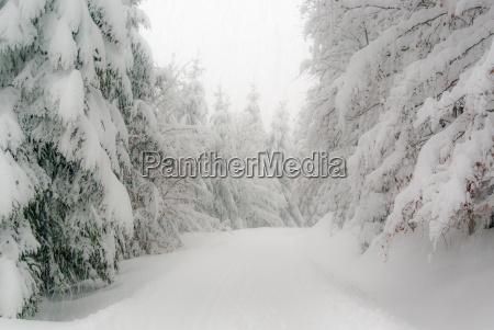 vinter skov i thueringen