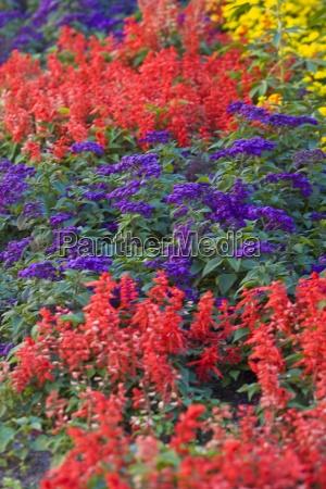 farve have blomst plante vaekst farverig