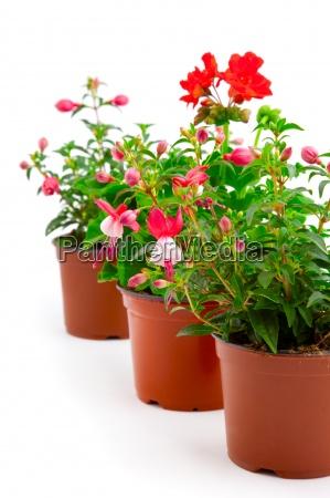 blomstre blomstrende blomsterpragt flowerage springe ud
