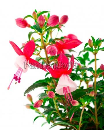 blomst plante vaekst blomstre blomstrende blomsterpragt