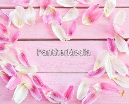 rustik traeplader med tulpenblaettern