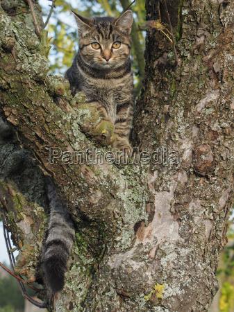 tree pet rise climb climbing ascend