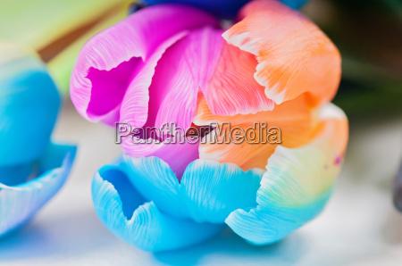 macro da tulipa multicolorida