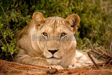 dyr afrika kenya love kat wildlife