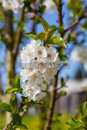 close up detalhe closeup flor lindas