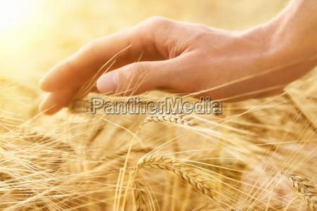 hand strog korn orer