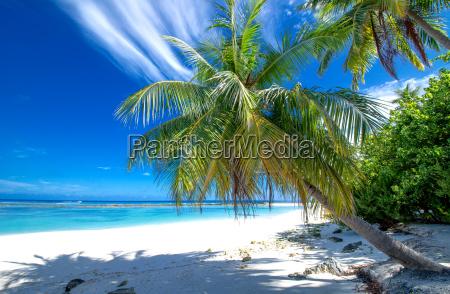 afsondret strand med palmer