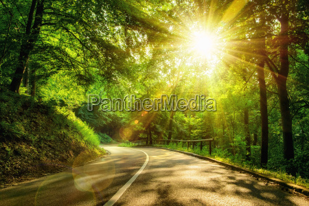 evocative road in forest