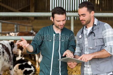 farmer, og, veterinær, arbejder, sammen, i - 14271053