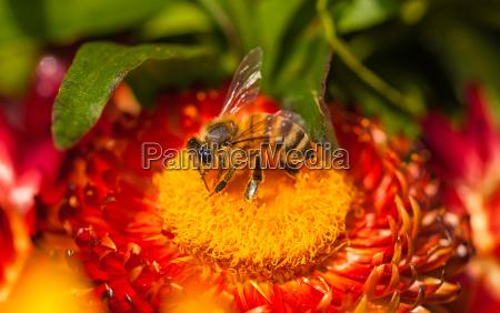 close up closeup animal inseto insetos
