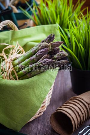 friske gronne asparges med haveredskaber