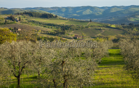 trae landbrug agerbrug vin vinbjerge vingarde