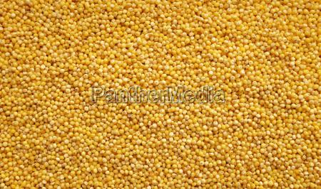 mad levnedsmiddel naeringsmiddel fodevare korn ra