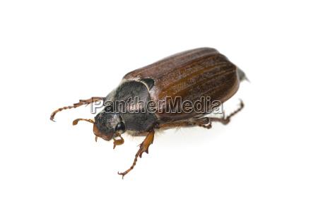 lukke makrooptagelse naerbillede dyr insekt insekter