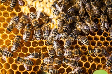 close up inseto agricultura abelhas